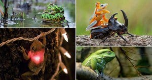 Awesome Looking Frogs And Toads