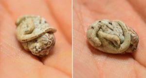 Baby Chameleon Doesnt Realize Hes Born