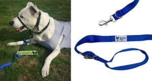 Barklyn Pup Dog Leash