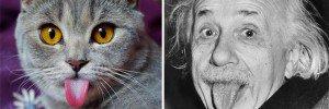 Cat Channels Einstein