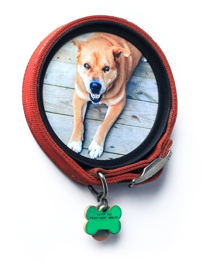 Pet Owners Everywhere Will Love These Collar Keepsake