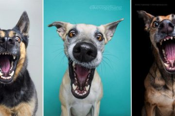Expressive Doggy Portraits