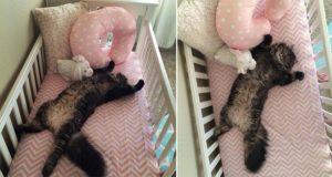 Finn The Cat Baby Crib