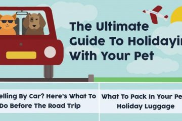 Guide To Traveling With Your Pet