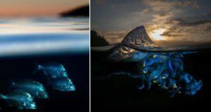 Half Underwater Photos Of Sea Creatures