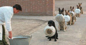 Queueing Police Dogs In China
