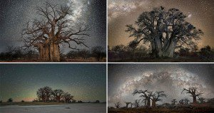 Starlit Images Of Worlds Oldest Trees