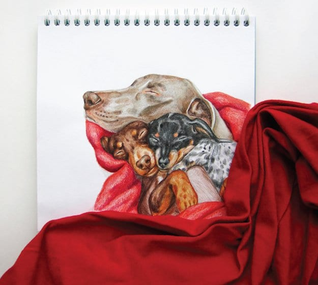 Valerie-Susik-dog-portraits-blanket