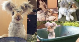Wally The Rabbit