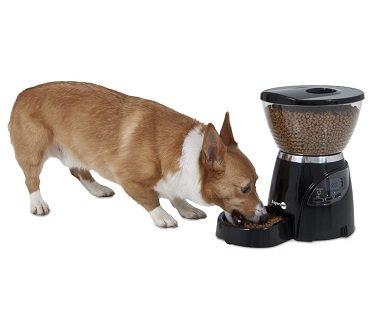 automatic pet feeder dog