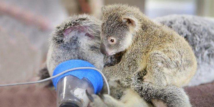 baby koala mom mask