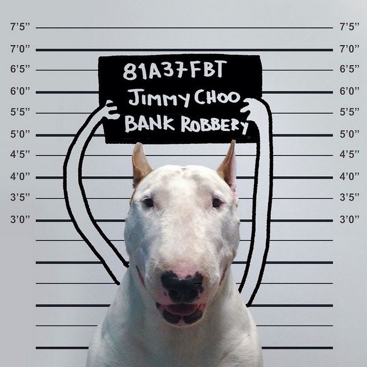 bank robber dog