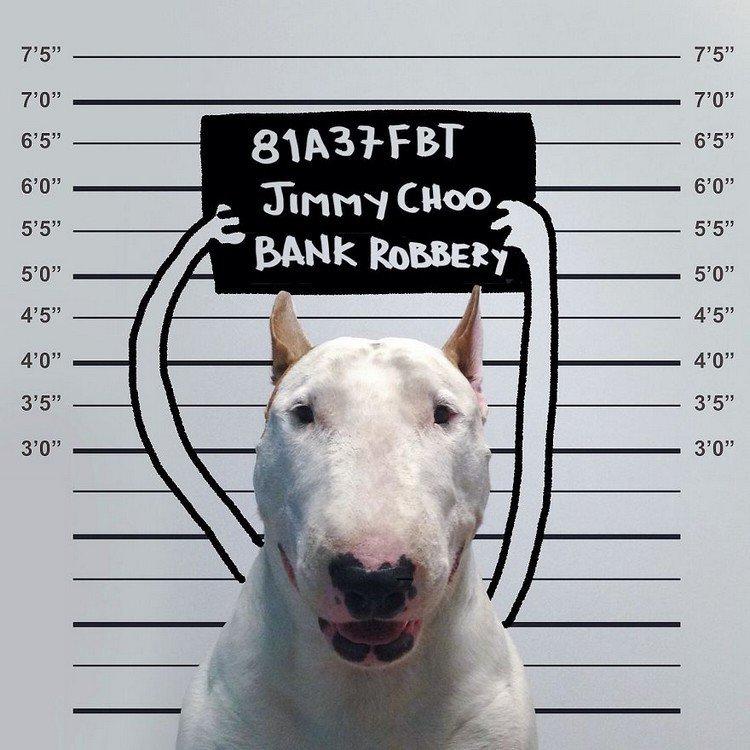 bank robber dog