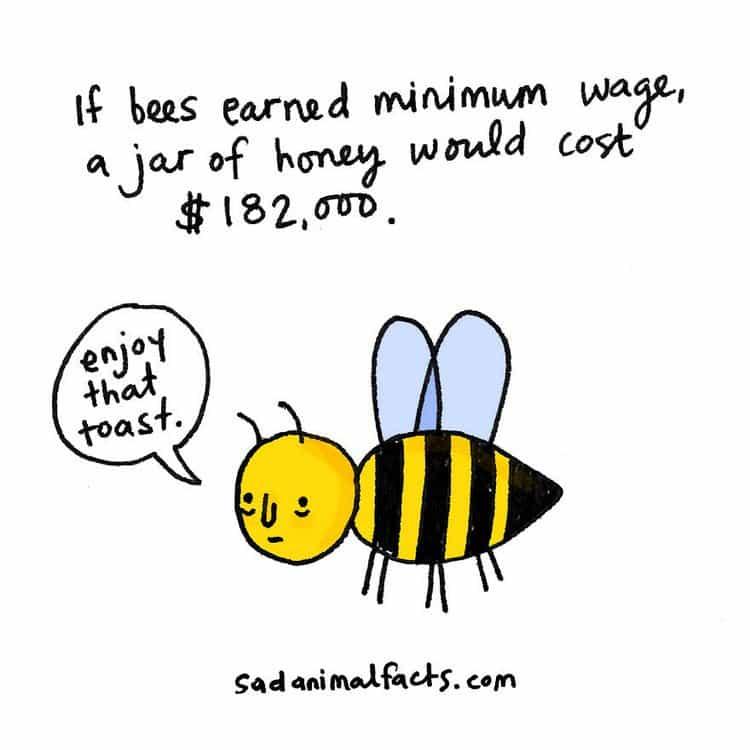 bee fact