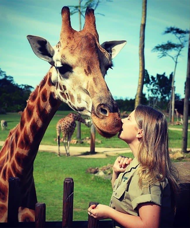 bindi-giraffe