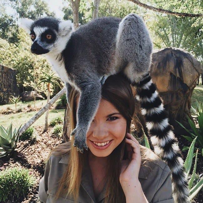 bindi-lemur