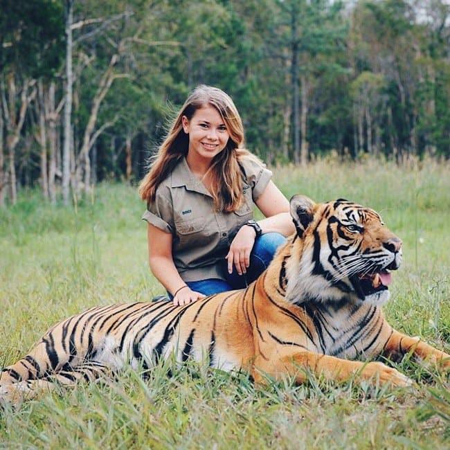 bindi-tiger
