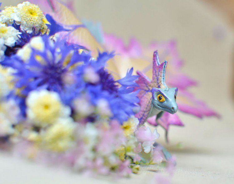 blue dragon flowers