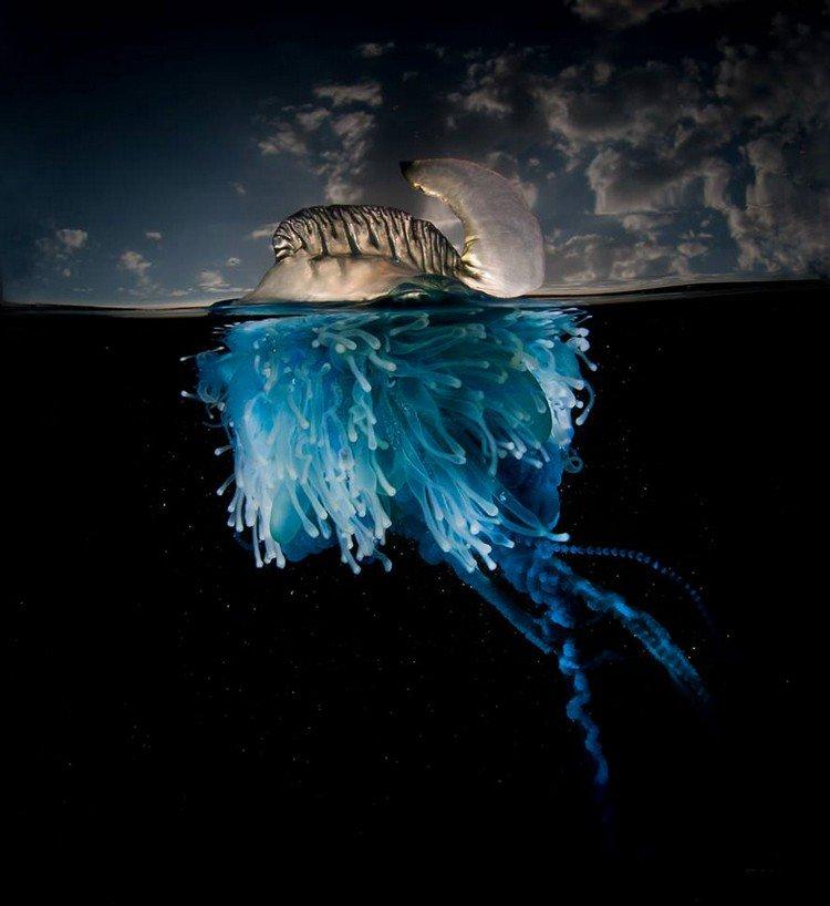 blue transparent jellyfish sky