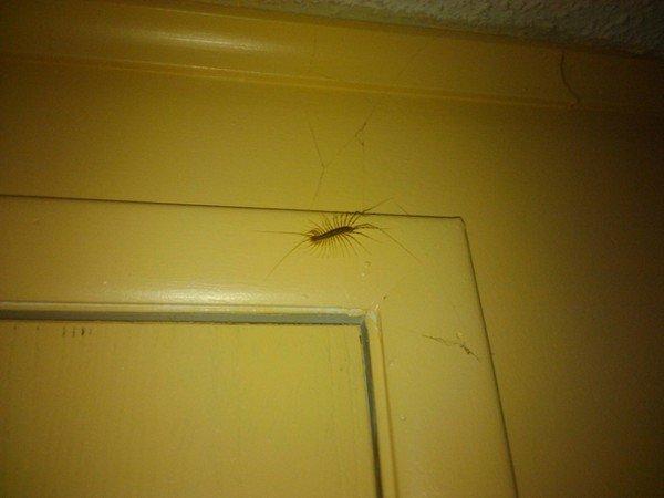 bug door