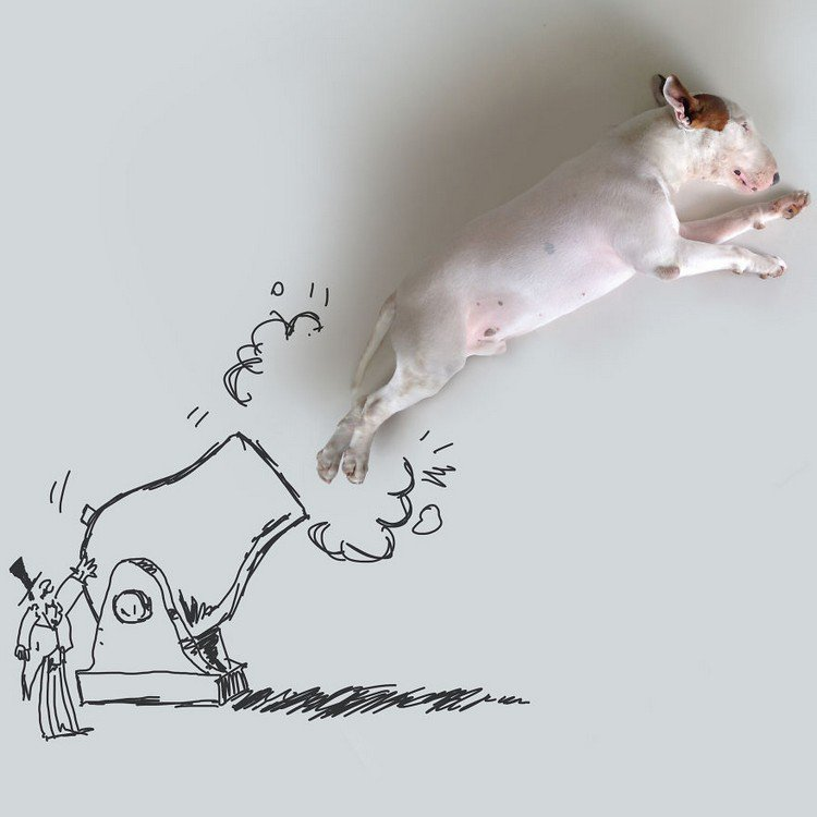 cannon dog