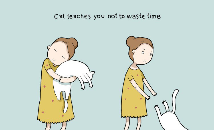 cat waste time