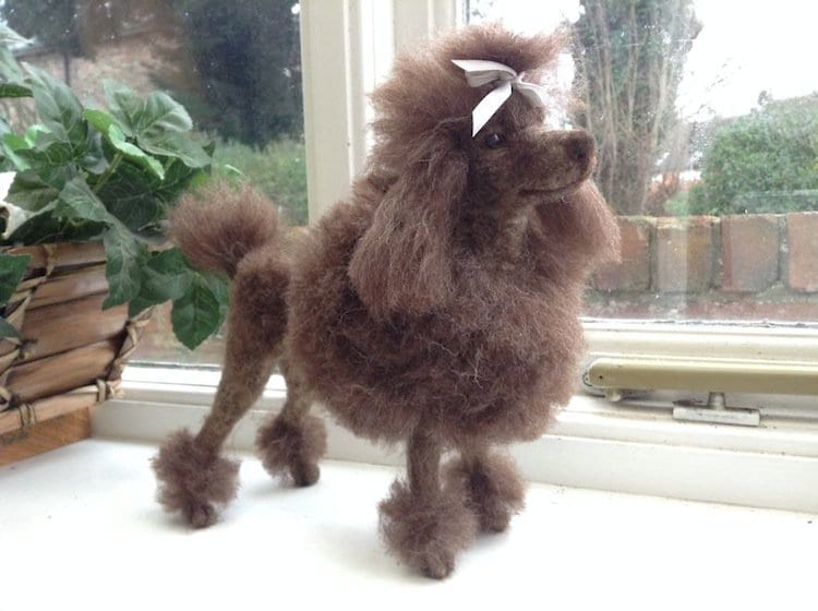 chicktin-poodle