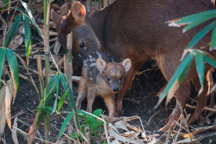 deer-small