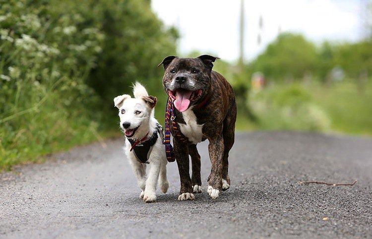 dog-besties