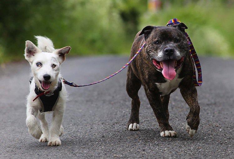 dog-blind