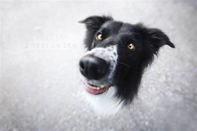 dog-close