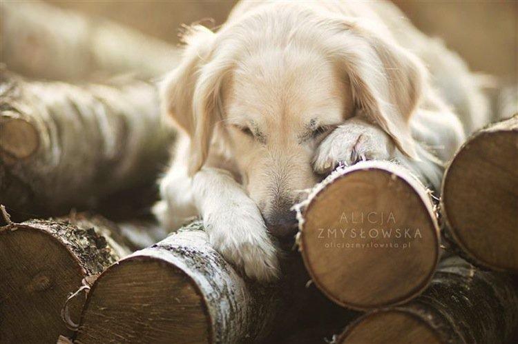 dog-comfy