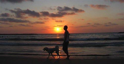 dog-dusk