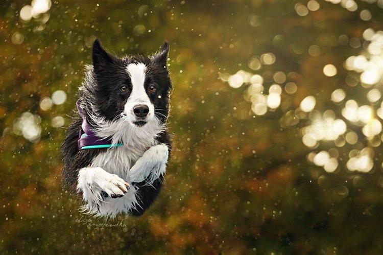dog-fly