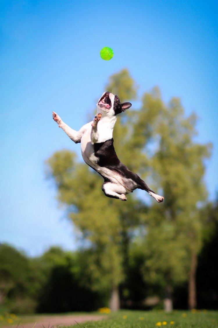 dog jumping park