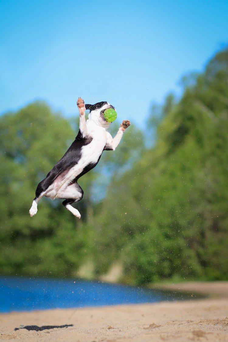 dog jumping water