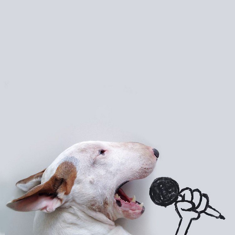 dog microphone