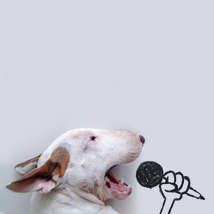 dog microphone