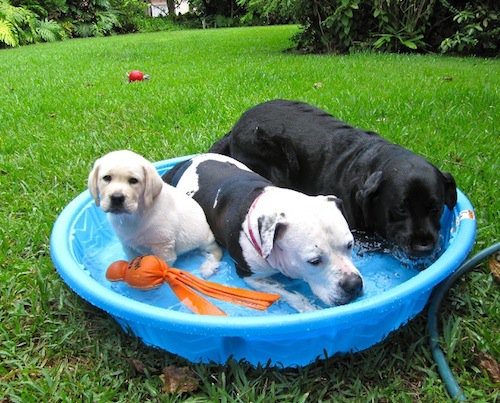 10 Ways To Keep Your Dogs Cool And Protect Them From The