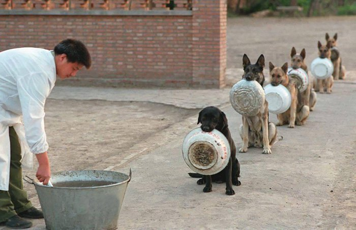 dogs-bowls