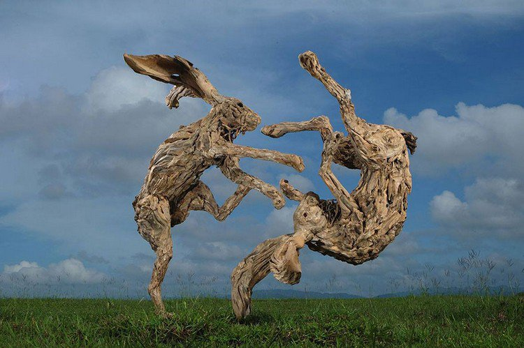 driftwood hares