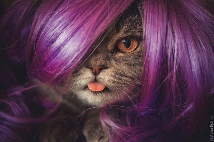 einstein-cat-melissa-purple