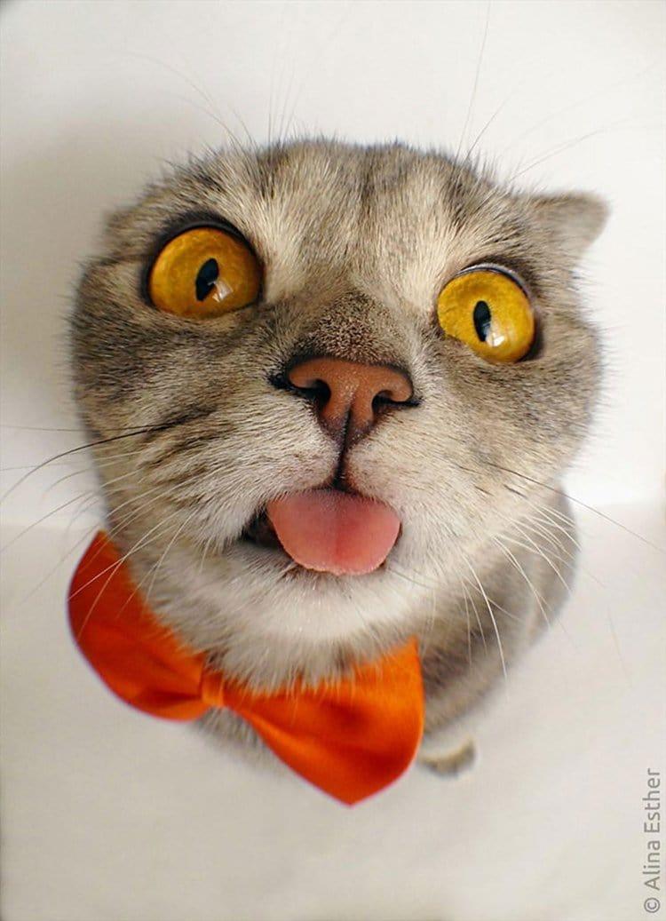 einstein-cat-melissa-tongue