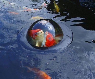 floating fish dome koi