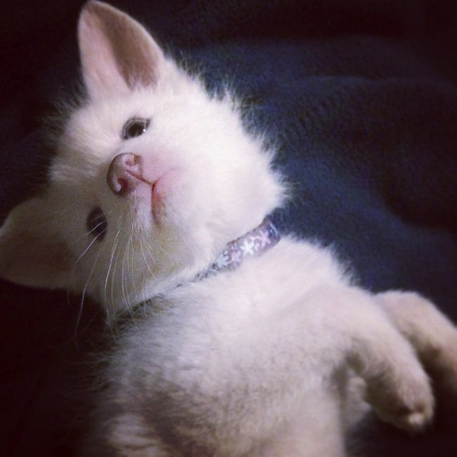 fox-cuter