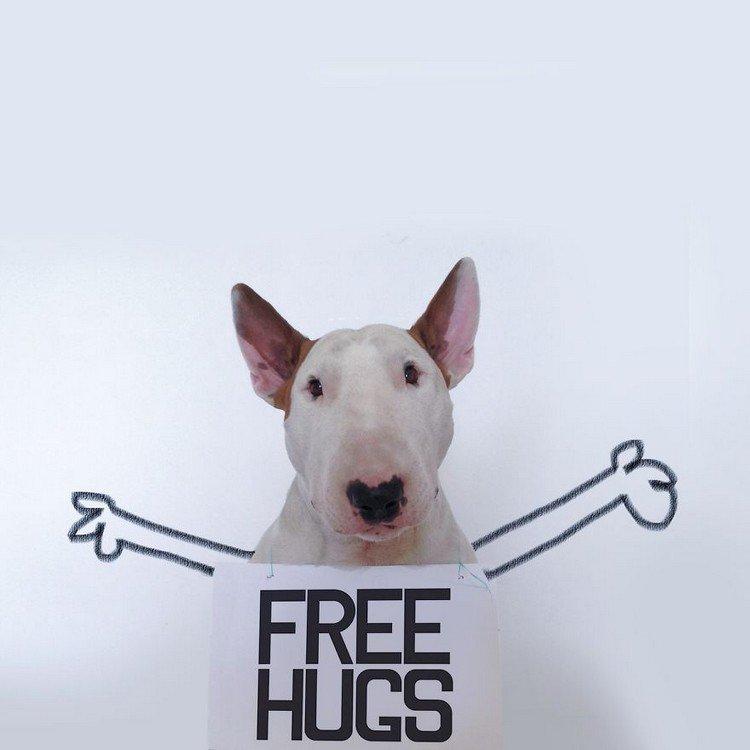 free hug dog