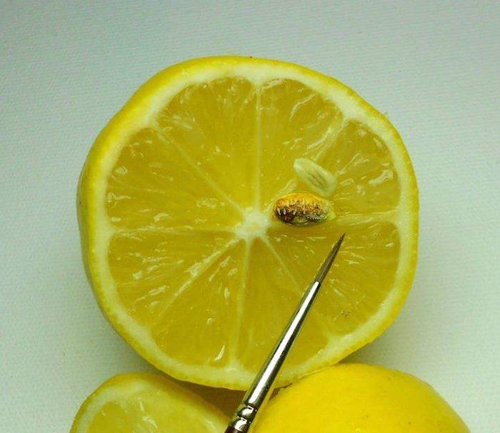 hasan-kale-miniature-paintings-lemon