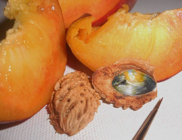hasan-kale-miniature-paintings-peach-pit