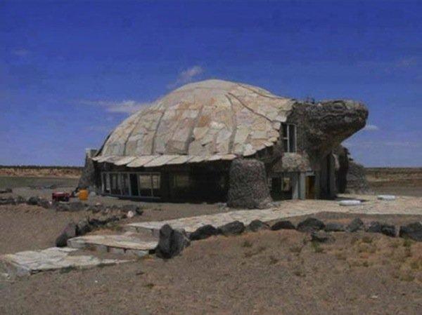 house-tortoise