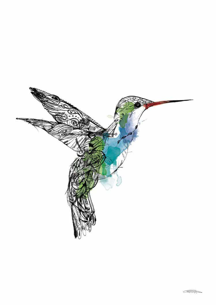 hummingbird doodles